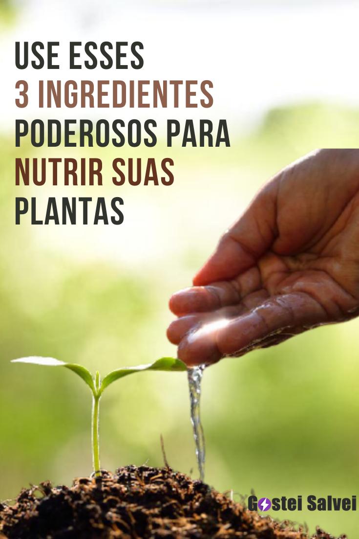 Use esses 3 ingredientes poderosos para nutrir suas plantas (O melhor fertilizante caseiro)