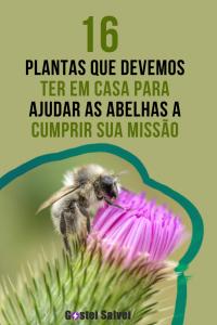 16 Plantas que devemos ter em casa para ajudar as abelhas a cumprir sua missão
