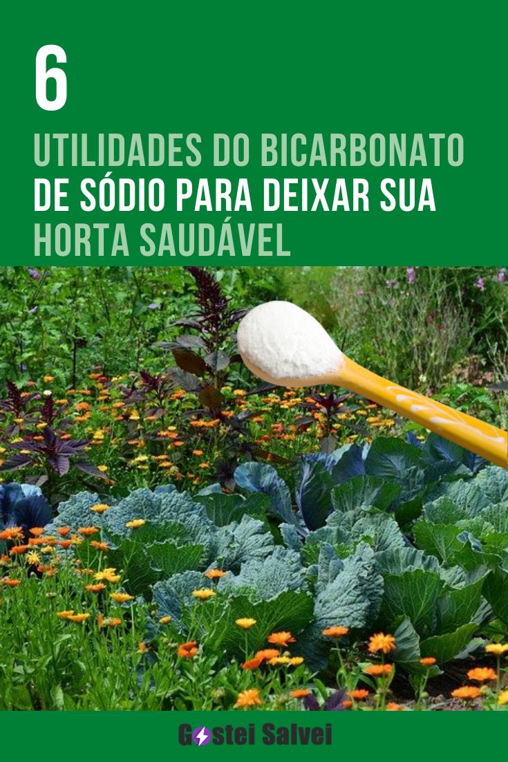 6 Utilidades do bicarbonato de sódio para deixar sua horta saudável