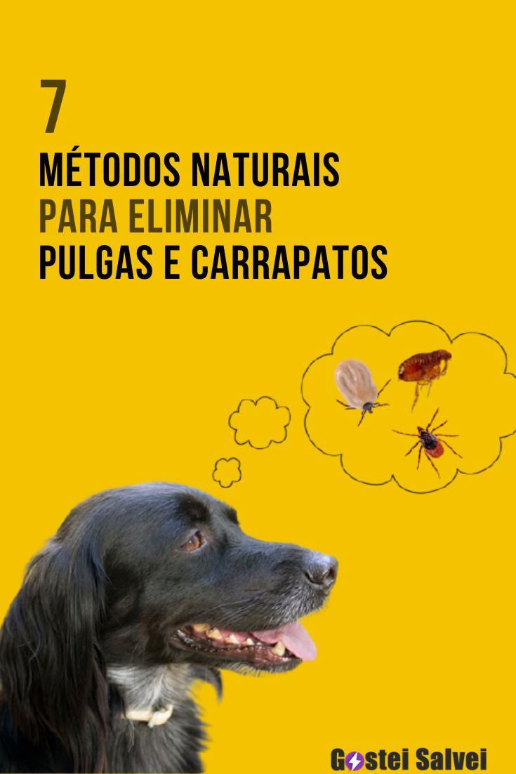 7 Métodos naturais para eliminar pulgas e carrapatos