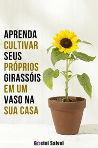 Aprenda cultivar seus próprios girassóis em um vaso na sua casa