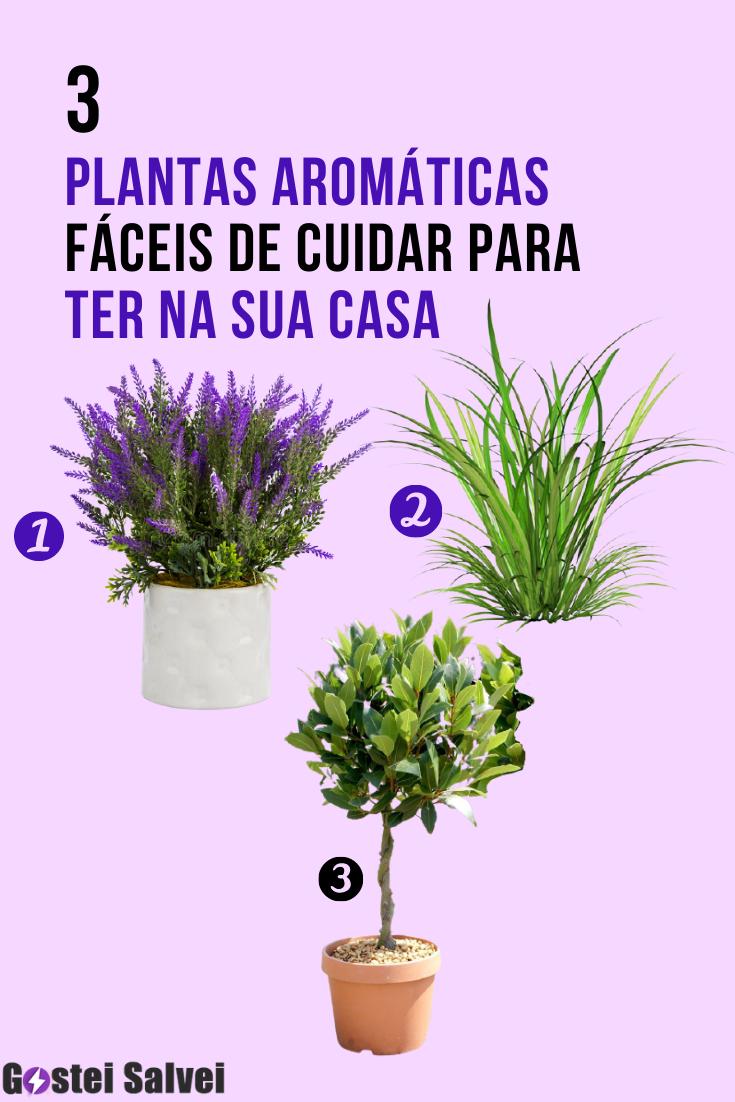 3 Plantas aromáticas fáceis de cuidar para ter na sua casa