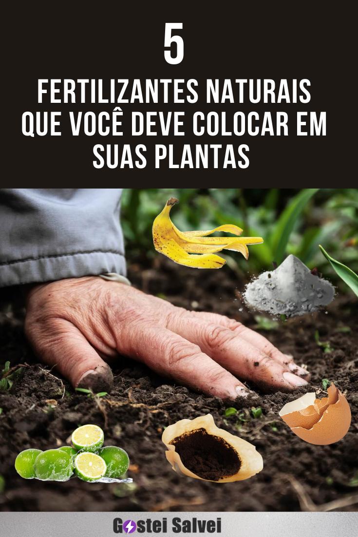 5 Fertilizantes naturais que você deve colocar em suas plantas