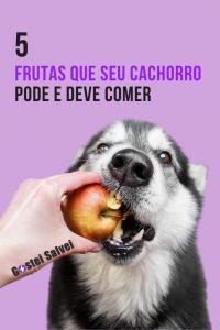 5 Frutas que seu cachorro pode e deve comer