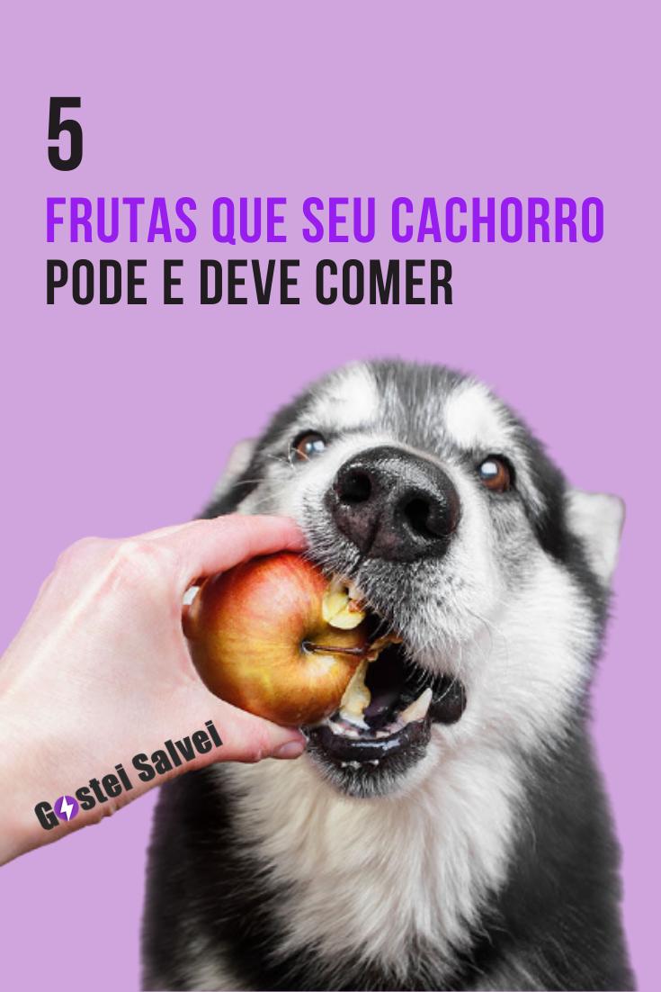 You are currently viewing 5 Frutas que seu cachorro pode e deve comer