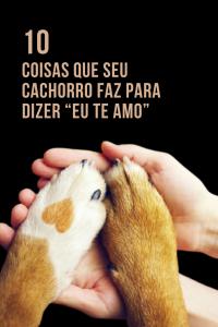 """Read more about the article 10 Coisas que seu cachorro faz para dizer """"eu te amo"""""""