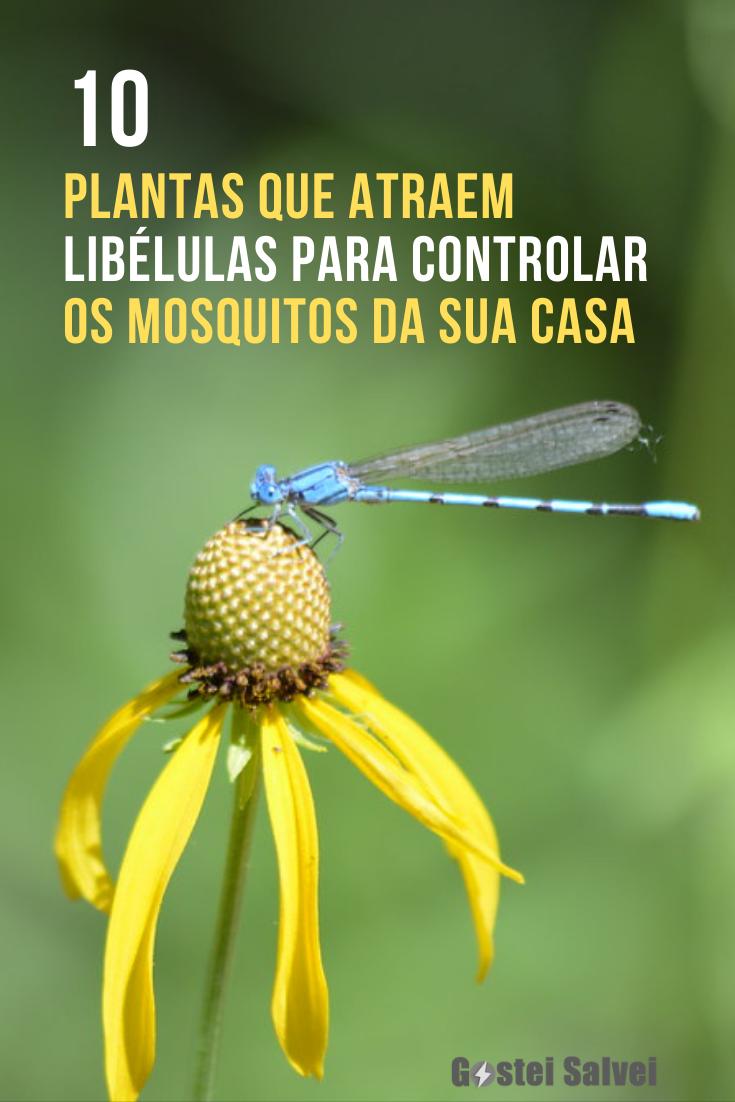 10 Plantas que atraem libélulas para controlar a quantidade de mosquitos