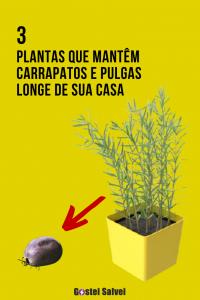 Read more about the article 3 Plantas que mantêm carrapatos e pulgas longe de sua casa