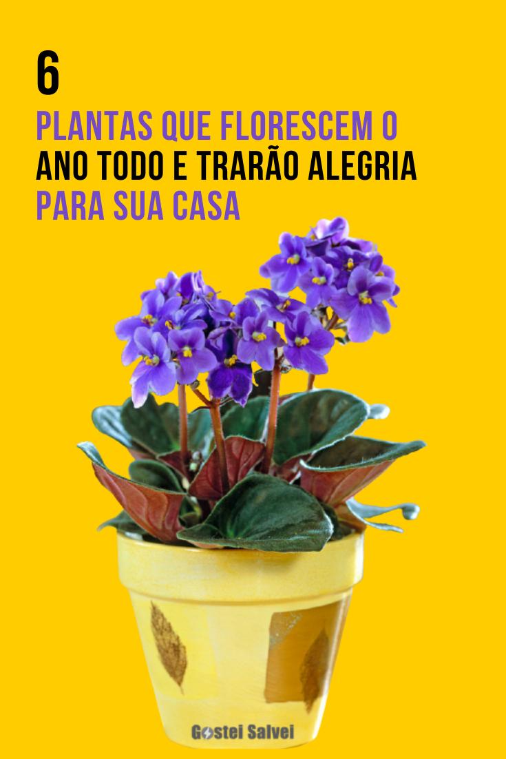 You are currently viewing 6 Plantas que florescem o ano todo e trarão alegria para sua casa