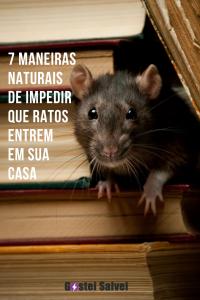 7 Maneiras naturais de impedir que ratos entrem em sua casa
