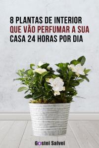 8 Plantas de interior que vão perfumar a sua casa 24 horas por dia