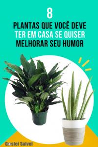 8 Plantas que você deve ter em casa se quiser melhorar seu humor