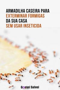 Armadilha caseira para exterminar formigas da sua casa sem usar inseticida