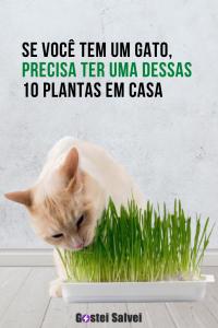 Read more about the article Se você tem um gato, precisa ter uma dessas 10 Plantas em casa