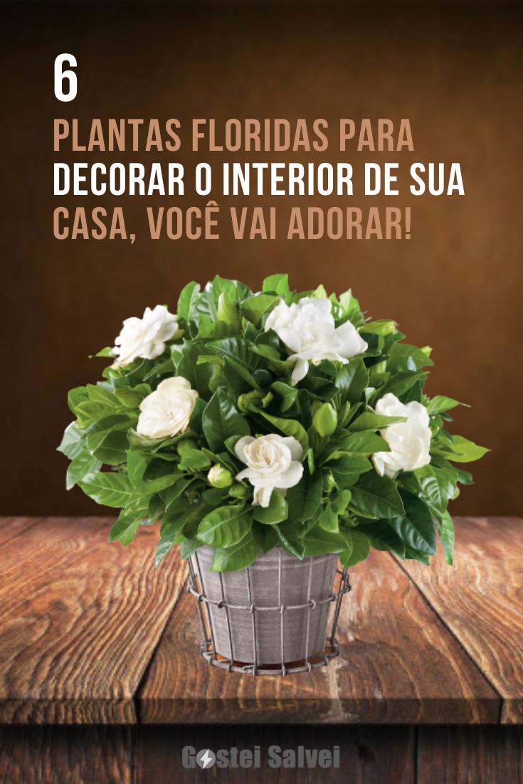 You are currently viewing 6 Plantas floridas para decorar o interior de sua casa, você vai adorar!
