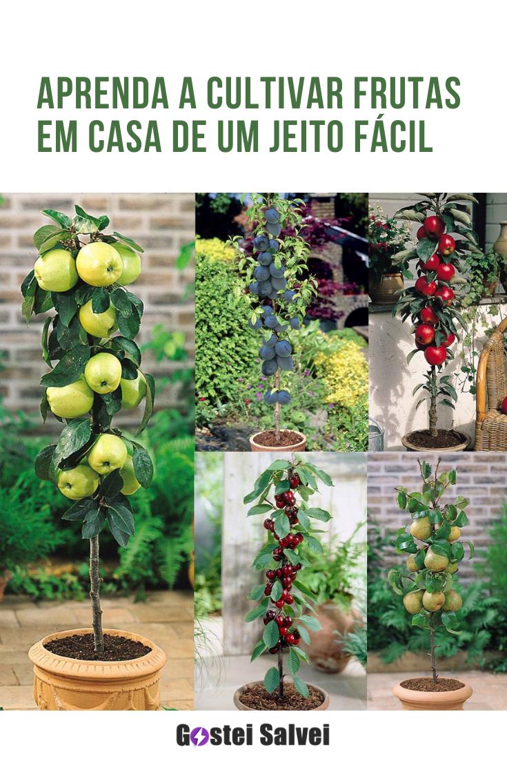 You are currently viewing Aprenda a cultivar frutas em casa de um jeito fácil