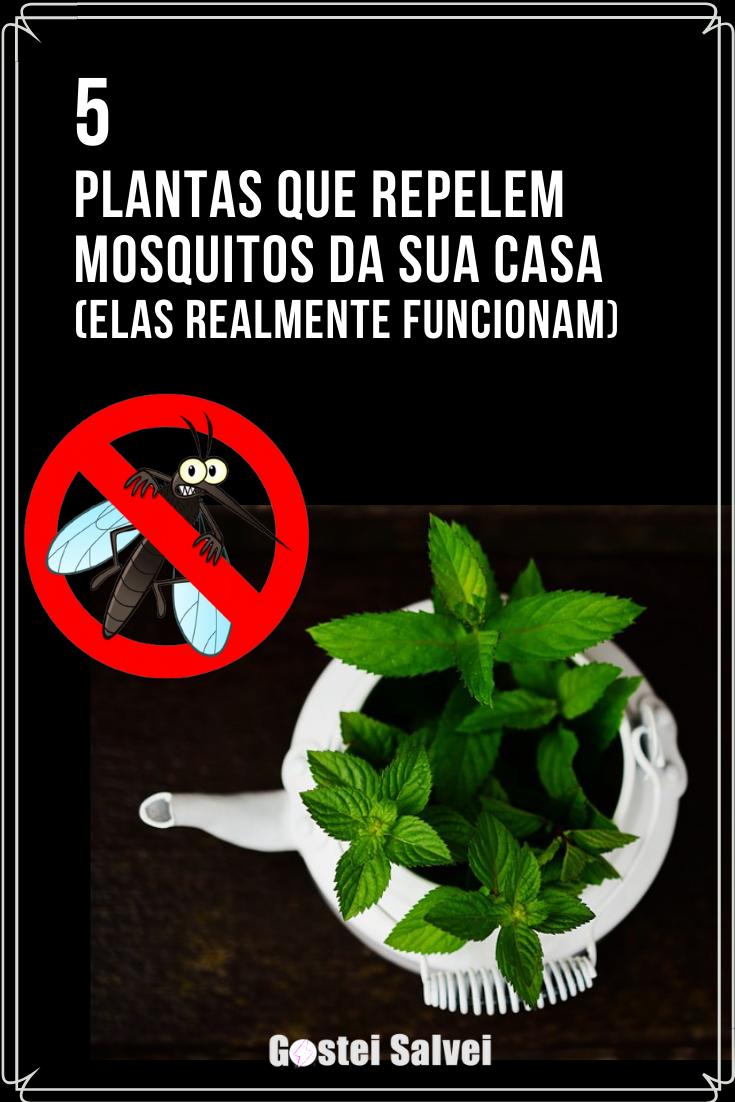 You are currently viewing 5 Plantas que repelem mosquitos – Elas realmente funcionam