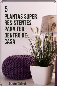 Read more about the article 5 Plantas super resistentes para ter dentro de casa