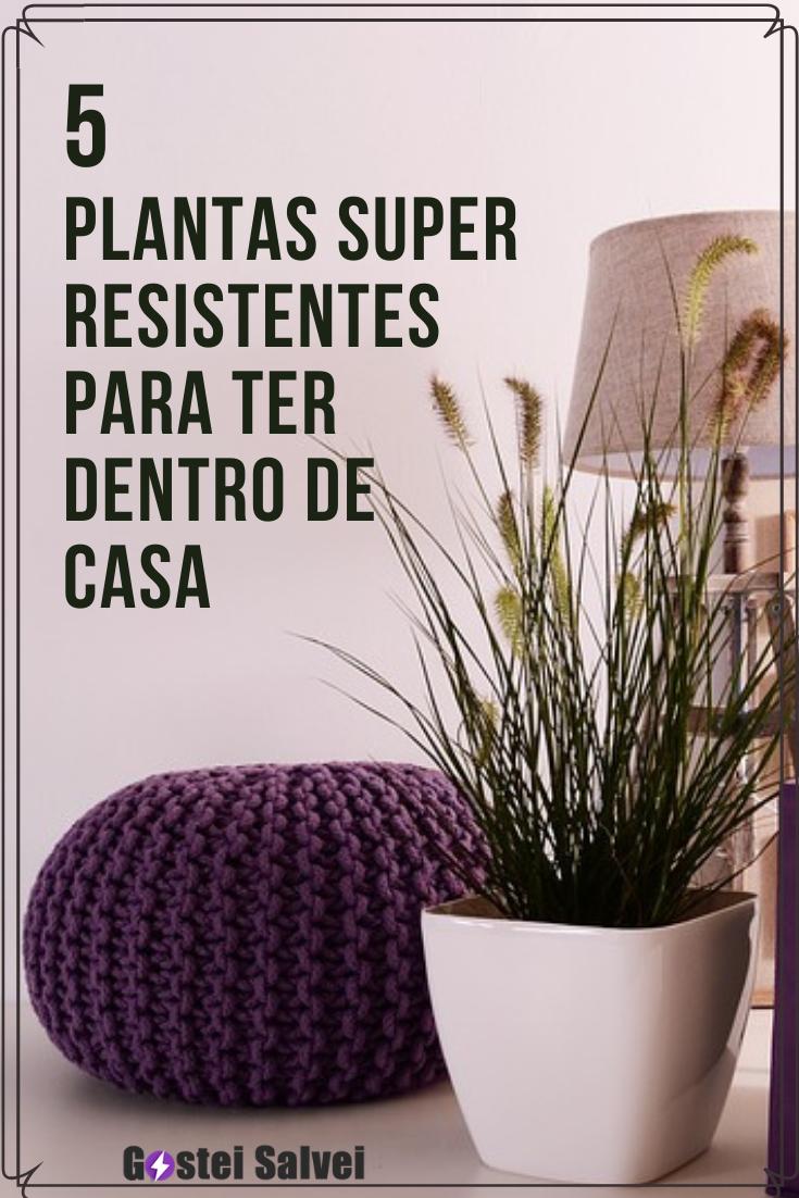 You are currently viewing 5 Plantas super resistentes para ter dentro de casa