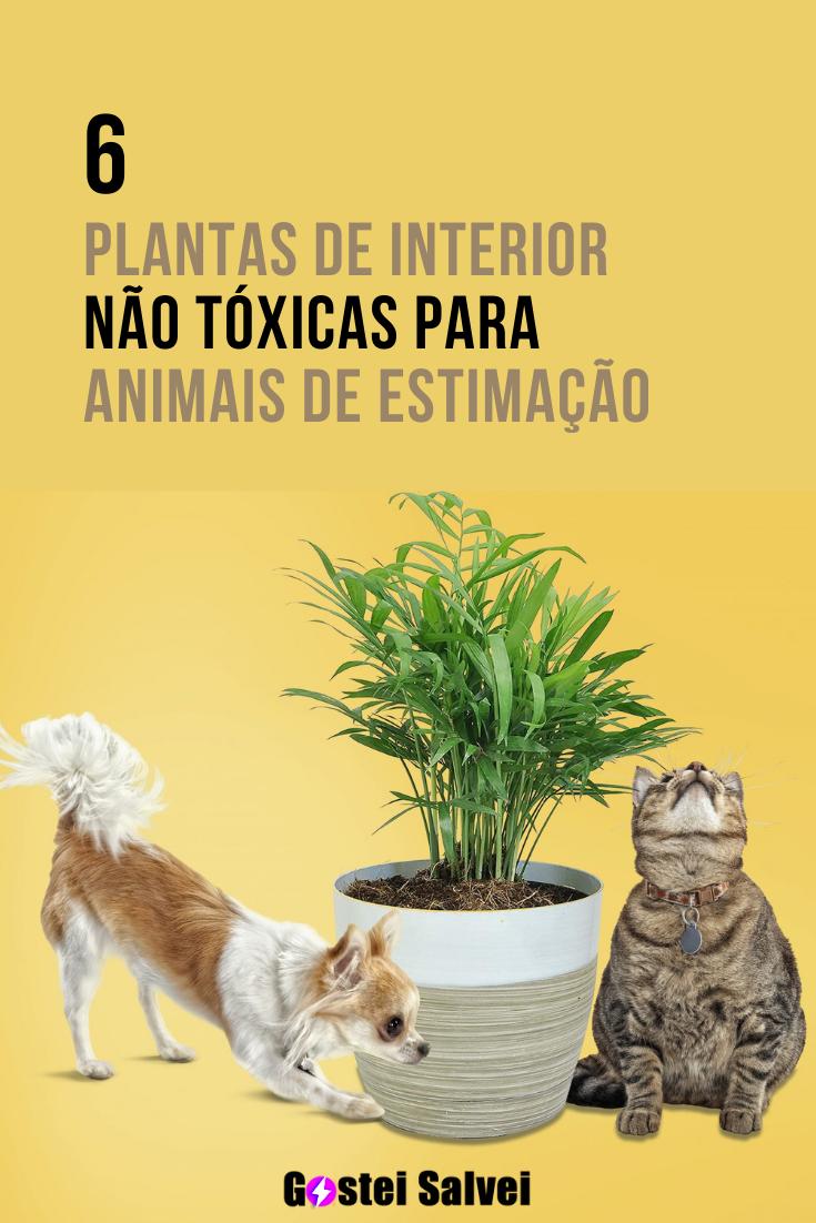You are currently viewing 6 Plantas de interior NÃO tóxicas para animais de estimação