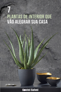Read more about the article 7 Plantas de interior que vão alegrar sua casa