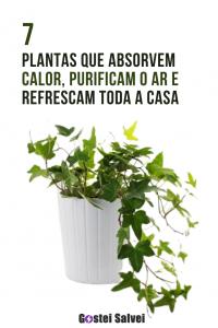 Read more about the article 7 Plantas que absorvem calor, purificam o ar e resfriam toda a casa