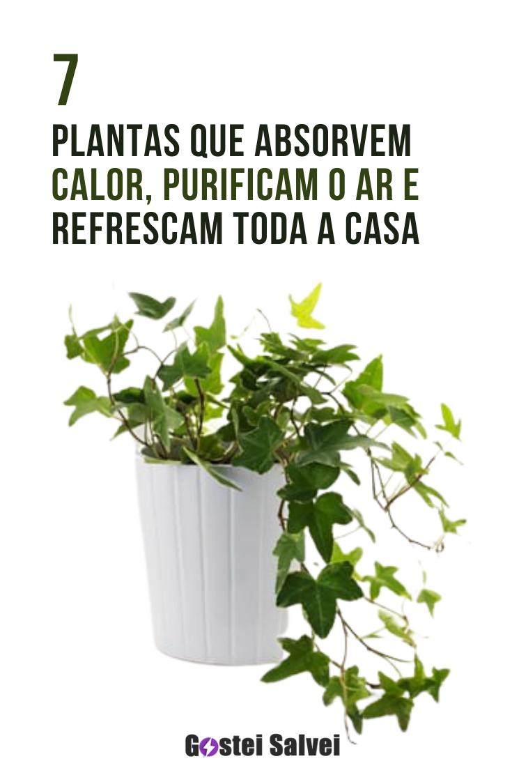 You are currently viewing 7 Plantas que absorvem calor, purificam o ar e resfriam toda a casa