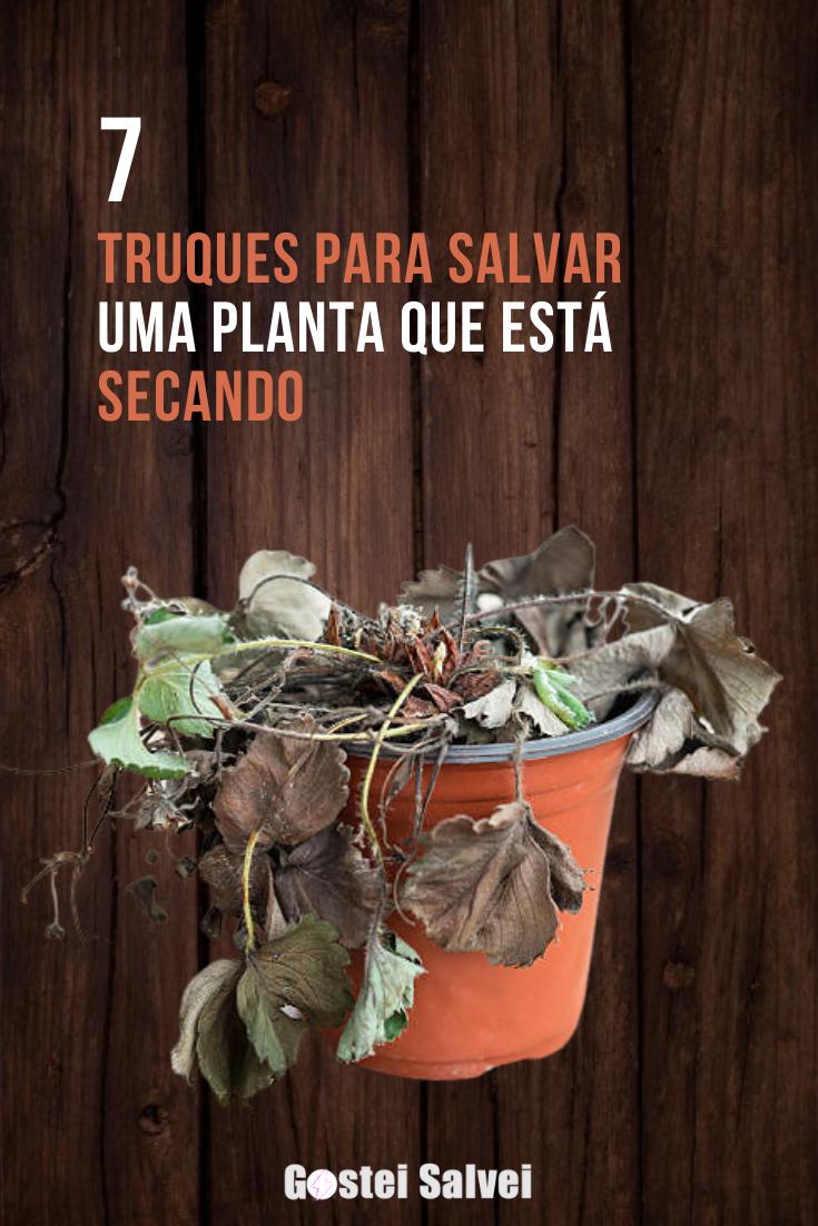 You are currently viewing 7 Truques para salvar uma planta que está secando