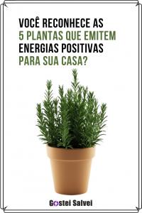 Read more about the article Você reconhece as 5 plantas que emitem energias positivas para sua casa?