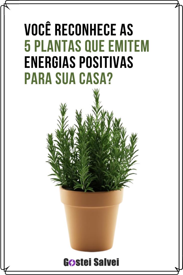 You are currently viewing Você reconhece as 5 plantas que emitem energias positivas para sua casa?