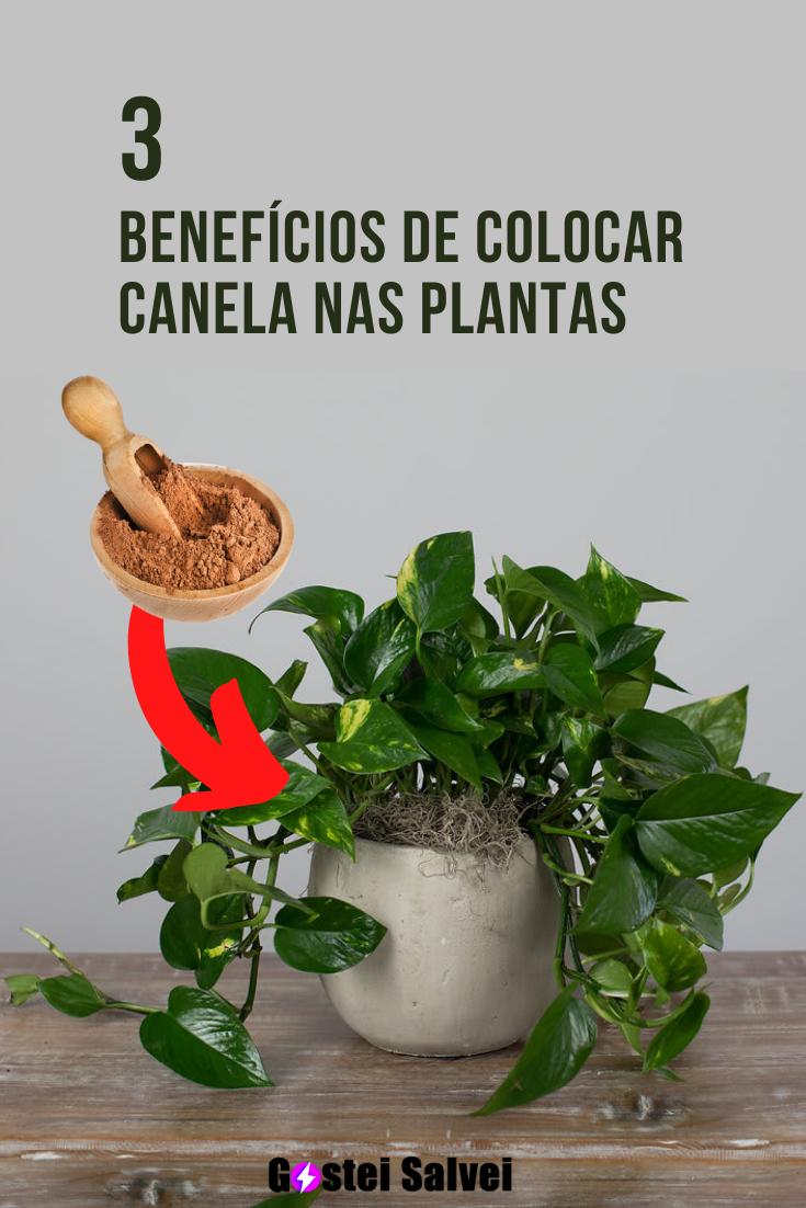 You are currently viewing 3 Benefícios de colocar canela nas plantas