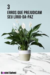 Read more about the article 3 Erros que prejudicam seu Lírio-da-paz