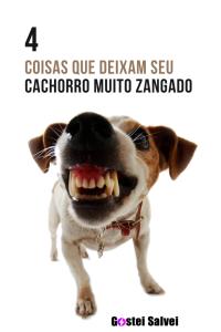 Read more about the article 4 Coisas que deixam seu cachorro muito zangado
