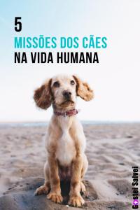 Read more about the article 5 Missões dos cães na vida humana