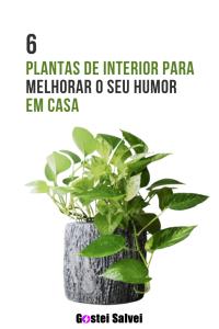 Read more about the article 6 Plantas de interior para melhorar o seu humor em casa