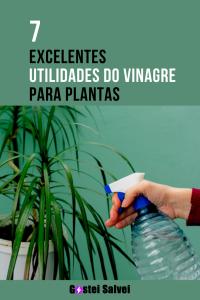 Read more about the article 7 Excelentes utilidades do vinagre para plantas