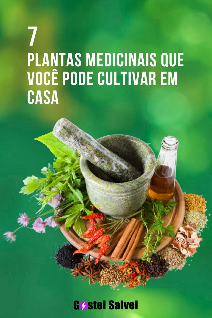 You are currently viewing 7 Plantas medicinais que você pode cultivar em casa