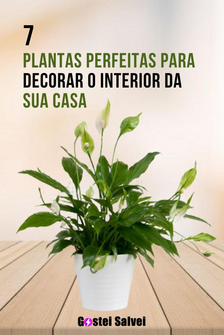 You are currently viewing 7 Plantas perfeitas para decorar o interior da sua casa