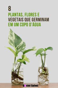 Read more about the article 8 Plantas, flores e vegetais que germinam em um copo d'água