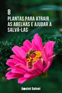 Read more about the article 8 Plantas para atrair as abelhas e ajudar a salvá-las