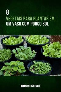 Read more about the article 8 Vegetais para plantar em um vaso com pouco sol