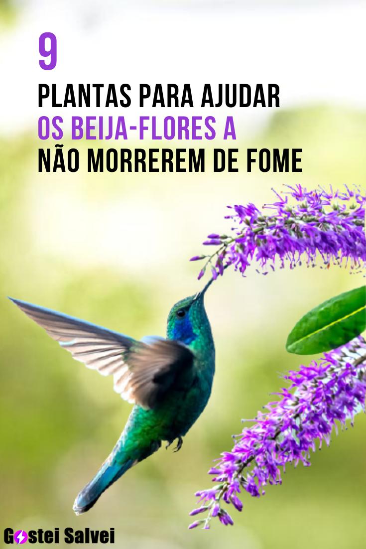 You are currently viewing 9 Plantas para ajudar os beija-flores a não morrer de fome