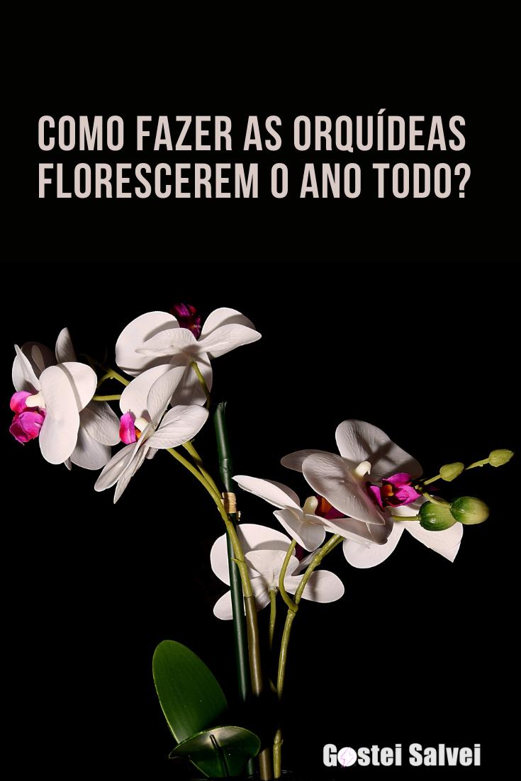 You are currently viewing Como fazer as orquídeas florescerem o ano todo?