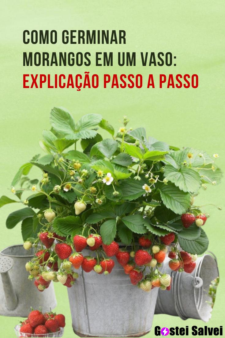 You are currently viewing Como germinar morangos em um vaso: Explicação passo a passo