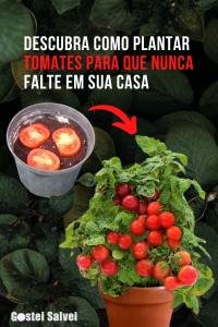 Read more about the article Descubra como plantar tomates para que nunca falte em sua casa