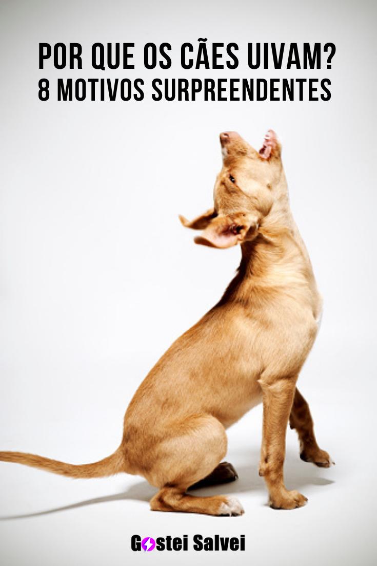 You are currently viewing Por que os cães uivam? 8 Motivos surpreendentes