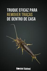 Read more about the article Truque eficaz para remover traças de dentro de casa