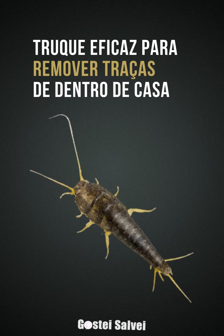 You are currently viewing Truque eficaz para remover traças de dentro de casa